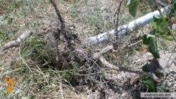 Դավիթաշենում ծառեր են արմատախիլ արվել