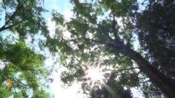 მწვანე საფარი თბილისში