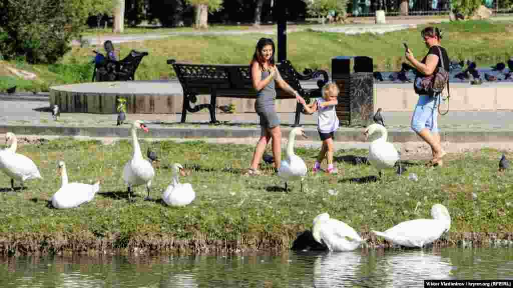 Лебеди «позируют» на фотокамеру