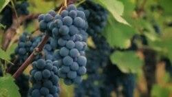 Грузинское вино Ркацители в Вирджинии