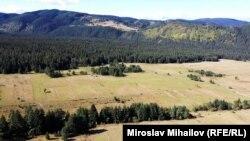 Част от гората край Говедарци вече изчезва