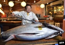 Японский тунец на российский рынок никогда не попадал