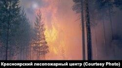 Лесные пожары в Сибири в последние годы достигают небывалых масштабов