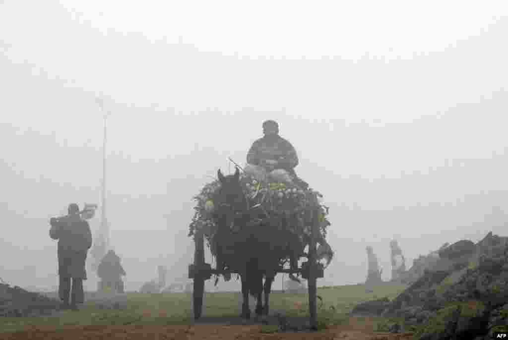 A Pakistani rider drives a horse-drawn cart loaded with turnips on a foggy street in Lahore on December 24. (AFP/Arif Ali)