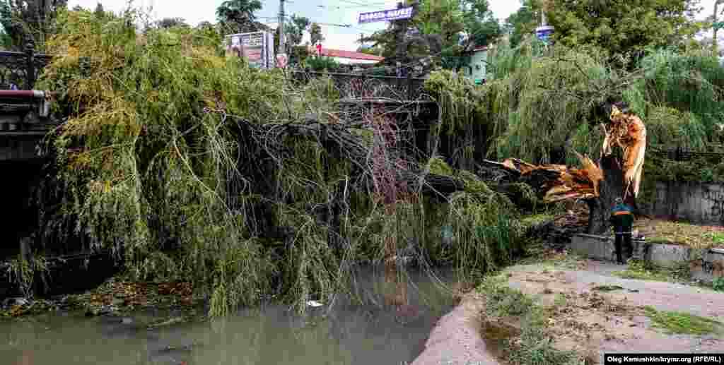 Діставати з річки це дерево буде проблематично