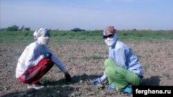 Uzbekistan - Forced Child labour