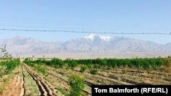Ферганская долина, регион с богатыми сельскохозяйственными традициями, была источником напряженности между Узбекистаном, Кыргызстаном и Таджикистаном на протяжении десятилетий.