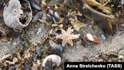 Мертвые морские животные вымывает на побережье Камчатки.