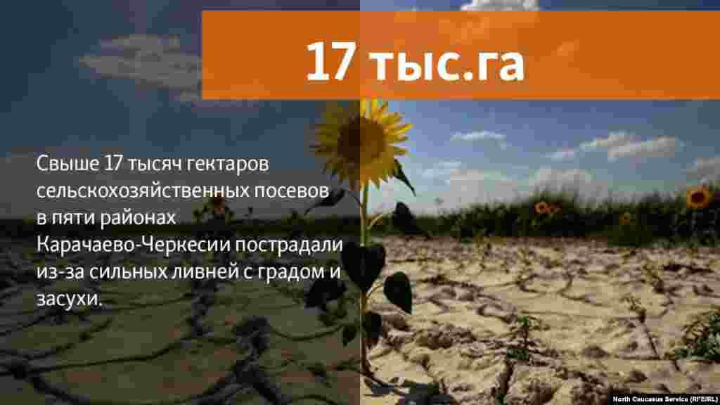 20.07.2018 // Свыше 17 тысяч гектаров сельскохозяйственных посевов в пяти районах Карачаево-Черкесии пострадали из-за сильных ливней с градом и засухи.