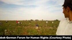 По данным правозащитных организаций, ежегодно власти Узбекистана мобилизуют на сбор хлопка тысячи сотрудников бюджетных организаций.