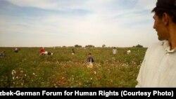 Uzbekistan - Child picking cotton in September 2012, Suyima Pakhtakor, Jizzakh. © 2012 Uzbek-German Forum for Human Rights