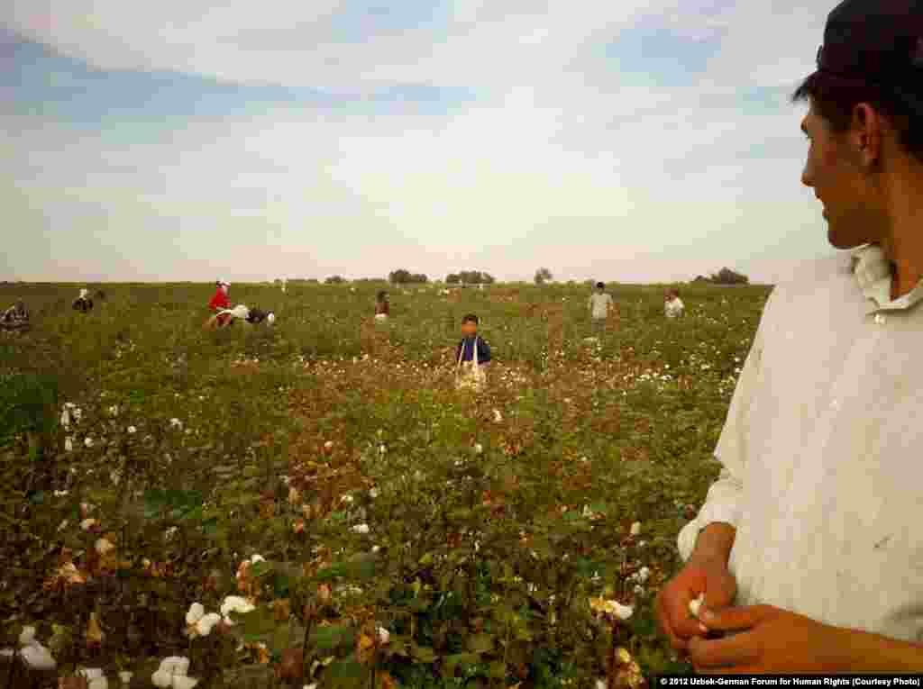 A child picks cotton in September 2012, Suyima Pakhtakor, Jizzakh.