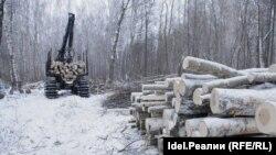 Лес Минобороны в Казани у РКБ. 18 февраля 2014 года