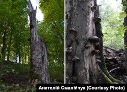Дерева тут не рубають – вони помирають своєю смертю