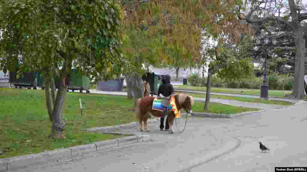 Пони под попоной ждет платежеспособных наездников