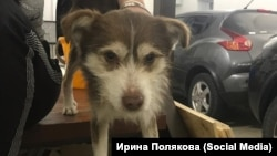 """Собака из приюта """"Дружок"""" под Благовещенском, архивное фото"""