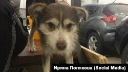 """Собака из приюта """"Дружок"""" под Благовещенском"""