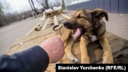Чорнобильські собаки тримаються біля ліквідаторів і туристів