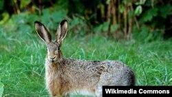 در مجموع ۶۱ خرگوش به دام افتادند که به مناطق محافظت شده حیات وحش منتقل شدند