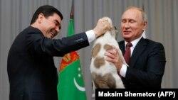 Президент Туркменистана Гурбангулы Бердымухамедов дарит алабая президенту России Владимиру Путину. Сочи, 11 октября 2017 года.