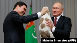 Turkmen President Gurbanguly Berdymukhammedov (left) presents Russian President Vladimir Putin with a Central Asian Shepherd puppy on the sidelines of the CIS summit in Sochi on October 11.