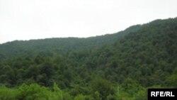 یکی از اراضی جنگلی شمال ایران (عکس تزئینی است)