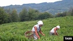 После распада СССР и грузино-абхазской войны вновь «войти в чайную реку» не увенчались успехом. Средства в отрасль были вложены сравнительно большие, но выстроить прежнюю систему реализации чайной продукции не удалось