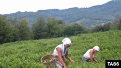 Импортируемый в Грузию этот вид продукта занимает 90 процентов ее рынка