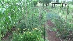 Organska poljoprivreda za početnike