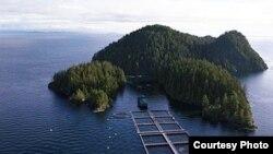 Ферма по разведению лосося в Атлантике. Courtesy of the BC Salmon Farmers Association