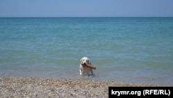 Черное море. Крымский берег