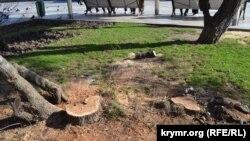 Спиленные деревья на набережной в Ялте