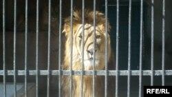 Ин шери зоопарки Душанбе акнун дӯсти баҳмут пайдо кард