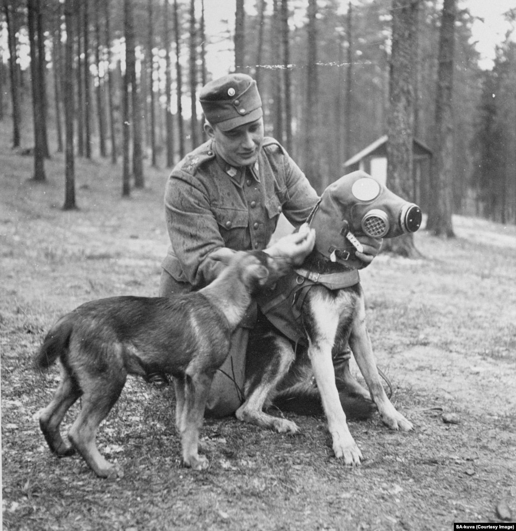 A gas mask being squeezed onto a military dog. There were widespread but ultimately unfounded fears the Red Army would use poison gas during the invasion.