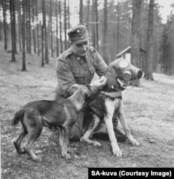 Câinii militari primeau măști de gaze. Temerile că URSS ar folosi gaze toxice au fost, totuși, nefondate.