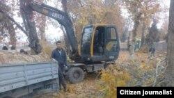 Вырубка многолетних чинар в парке отдыха «Маданият» в Пахтаабадском районе Андижанской области, 23 ноября 2018 года.
