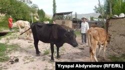Казакстан Кыргызстанга малын идентификациялоо талабын да койгон.