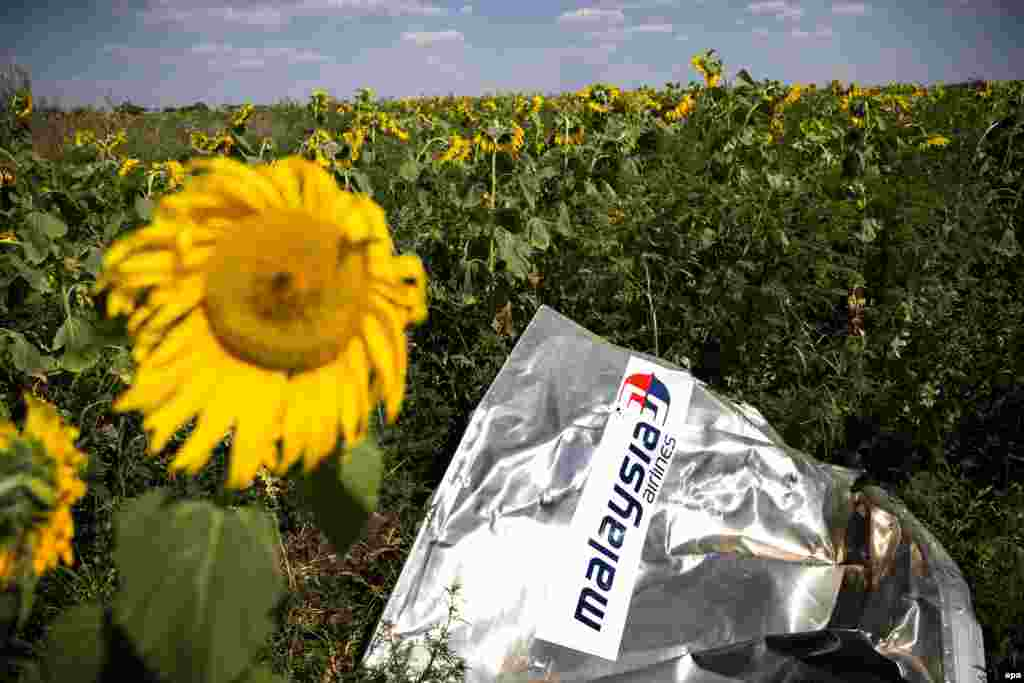 A sunflower blossoms next to the crash site of Malaysia Airlines Flight MH17 near the village of Rozsypne in eastern Ukraine. (epa/Jerry Lampen)