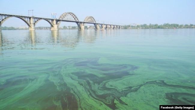 Цвітіння води у Дніпрі через забруднення