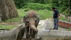 Amir Khalil from Four Paws International prepares to sedate Kaavan, an elephant at the Islamabad zoo, on September 4.