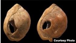 "Раковины из Южной Африки, которые 75 тысяч лет назад носили как бусы. <a href = "" http://www.nsf.gov/news/news_images.jsp?cntn_id=100362&org=BCS"" target=_blank>NSF Credit: C. Henshilwood & F. d'Errico</a>"