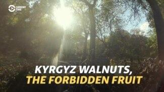 Kyrgyz Walnuts, The Forbidden Fruit