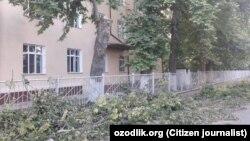 Вырубка чинар в Ташкентской области.