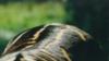 Мультизадачные зебры, скины для автомобиля и пожизненное за записку