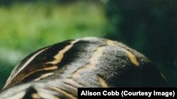 Полоски на спине зебры