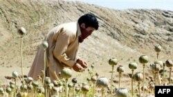 По мнению Запада, рост производства героина в Афганистане - одна из главных угроз стабильности страны