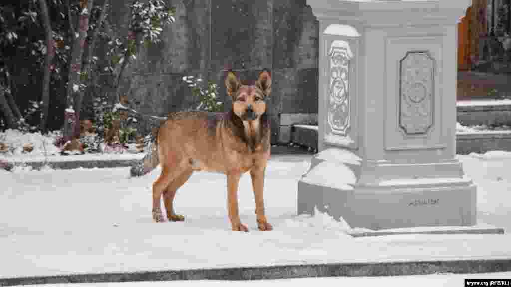 Вуличний пес снігу не боїться