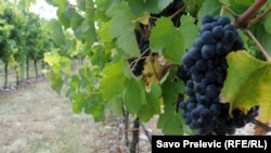 Around a fifth of the wine exported from Montenegro's Plantaze vineyard usually ends up in Russia. (file photo)