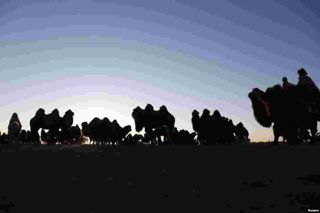 З таким наїзником верблюди можуть розвивати швидкість до 40 кілометрів за годину