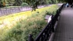 Симферопольская река Салгир превращается в болото (видео)